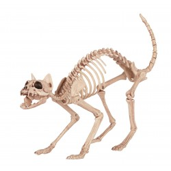 Skeleton Kitty Bones Prop