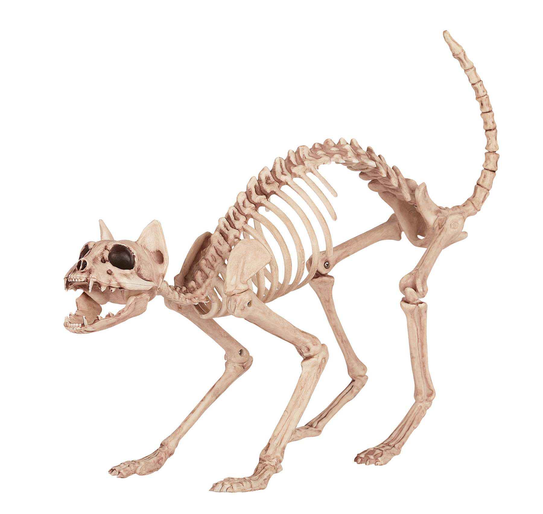 Skeleton Kitty Bones Prop - Creeped Out.ca